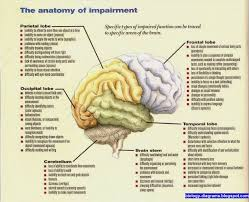 biology diagrams images pictures of human anatomy and physiology    brain anatomy and controling function