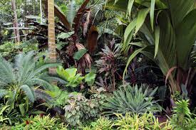 Small Picture Cycad Heliconia indica Calathea Cordyline Miss Andrea and