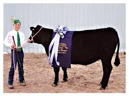 Noahs Angus Ranch - Cooperative Herds