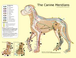 The Canine Meridians Bei Elemental Acupressure