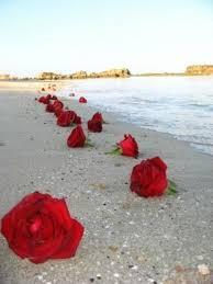 Resultado de imagem para flores na tarde