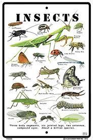 Amazon Com Crosswalks Insect Identification Chart Sign New