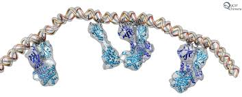 Bluetounge Virus Chimera Image Gallery