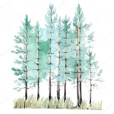 watercolor painting of pine tree wood stock vector
