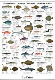 Saltwater Fish Chart Saltwater Fish Chart