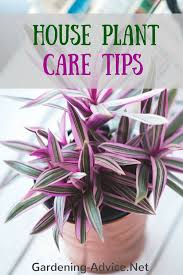 indoor house plant care how to care for common and exotic house plants