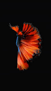How to Get Apple's Live Fish Wallpapers ...