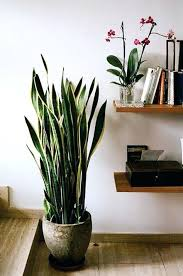 tall house plants lovable big indoor house plants best tall indoor plants ideas on big plants tall house plants