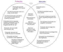 Eukaryotic And Prokaryotic Venn Diagram General Wiring Diagram
