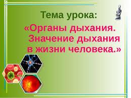 Презентация Органы дыхания Значение дыхания в жизни человека  Тема урока Органы дыхания Значение дыхания в жизни человека