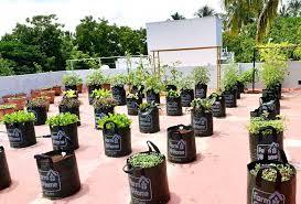 vegetable garden services tamil nadu