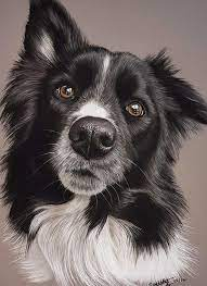 The 15 Most Realistic Australian Shepherd and Border Collie Paintings |  Australian shepherd, Border collie, Collie