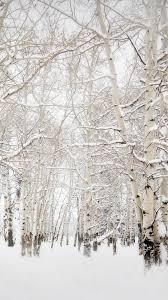 White Winter Forest iPhone 6s Wallpapers HD