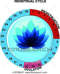 Female Menstrual Cycle Chart Clip Art K18736447 Fotosearch