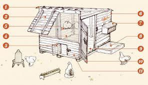 construire un poulailler pour le bien être de nos poulettes un logement sain des poules en bonne santé