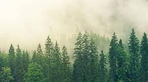 Rüyada Orman Görmek Ne Demek? Yeşil Ormanda Yürümek Ne Anlama Gelir? - Rüya  Tabirleri