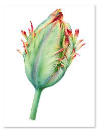 Переводная татуировка Зеленый Тюльпан 2skin 9888205 в ...