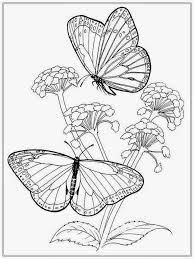Small Picture free coloring pages flowers and butterflies 28 images