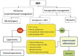 Proposal Of A Simplified Algorithm For The Management Of Sbo ...