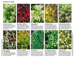 30 Of The Best Climbing Plants | Gardens Illustrated
