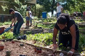 community gardening. Community Garden Projects And Tips Gardening
