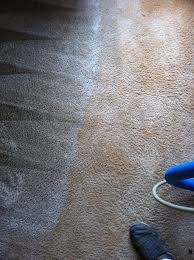 carpet groomer. costco carpet rake using for a thorough deep cleaning on your home decor groomer