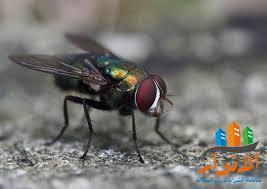 شركة مكافحة حشرات بالرس - شركة الانوار