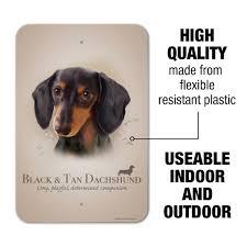 Black Dachshund Dog Breed (Page 5 ...