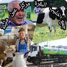 جمع حليب البقرة /صومام__/مركز عين مليلة - Photos