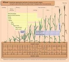 Wheat Growth Chart Using Fungicides On Wheat Integrated Pest And Crop