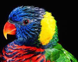 Parrot wallpaper, Hd wallpapers ...