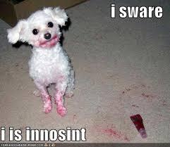 funny dog quotes via Relatably.com
