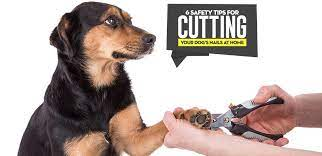 6 tips for cutting dogs nails at home