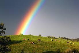 Image Nature Rainbow Meadow