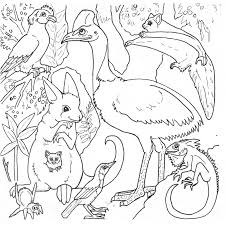 s google com search q erfly coloring pages clip art best of rainforest animals