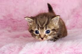 sweet cat love. Exellent Cat Cat Cute And Pink Image And Sweet Cat Love L