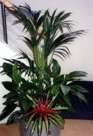 office plant displays. Office Plant Displays