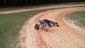 wheelchair for dogs diy projects craft
