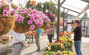 dümmen orange will showcase its sustainable developments and latest s in bedding plants perennials pot plants and tropical plants at flowertrials