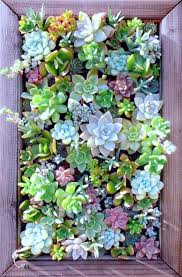fun succulent wall decor interior design ideas best 25 planter on garden framed art artificial