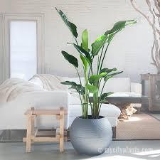 modern office plants. Bird Of Paradise Plant - Puro My City Plants Modern Office Plants E