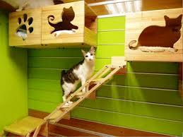 Cat House Indoor Cat House Pet House Design Pinterest Cat Houses Cat