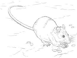 Small Picture Brown Rat coloring page Free Printable Coloring Pages