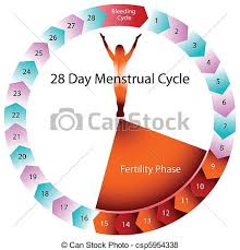 Period Cycle Pregnancy Chart Menstrual Cycle Fertility Chart