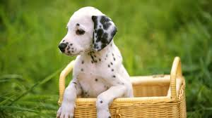 cute sad puppy wallpaper hd 1080p full hd wallpapers