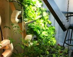 indoor hydroponic vegetable garden. DIY Hydroponic Gardening System Indoor Vegetable Garden