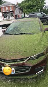 thanks tru green you s x post r mildlyinfuriating i redd it