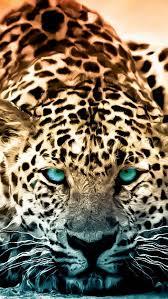 jaguar iphone wallpaper 380580