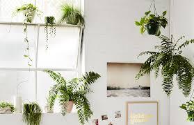 how to start an indoor garden a