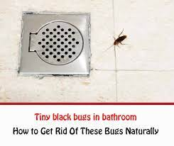 tiny black bugs in bathroom naturally